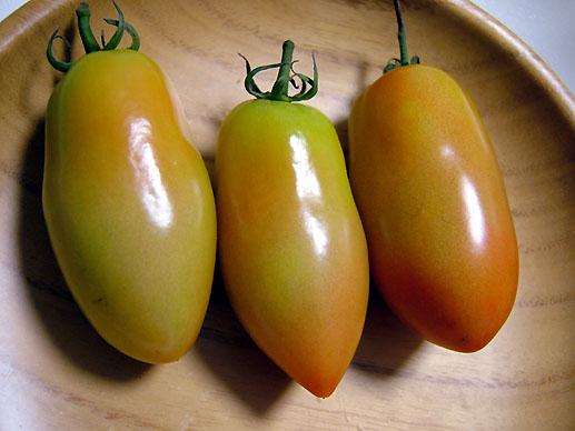 トマト01517.JPG
